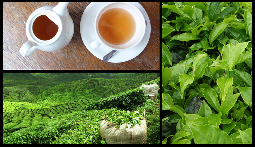 TEA PROCESSING, PRODUCT DIVERSIFICATION & VALUE ADDITION (Foreign Programme)